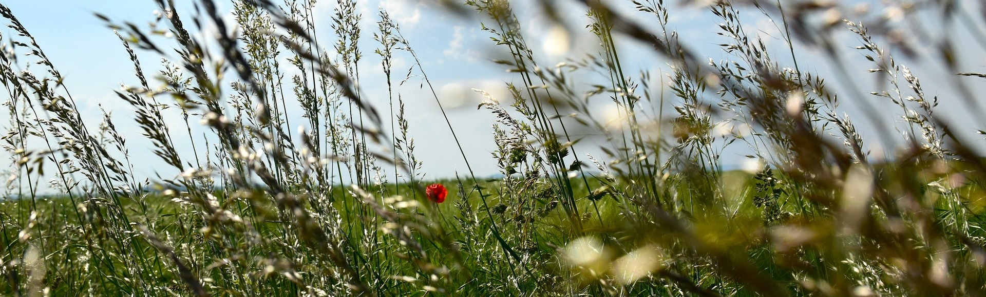 grass-seeds